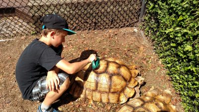 luke-and-turtle