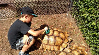 luke-and-turtle