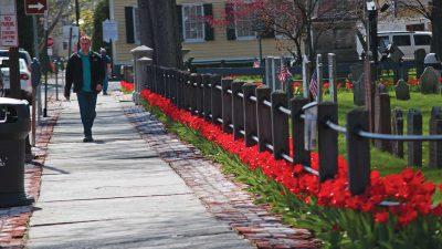 man-walking-uptown-tulips